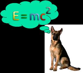 German shepherd quoting math